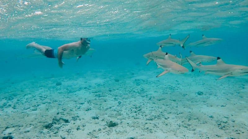 Bora Bora French Polynesia Snorkeling Sharks