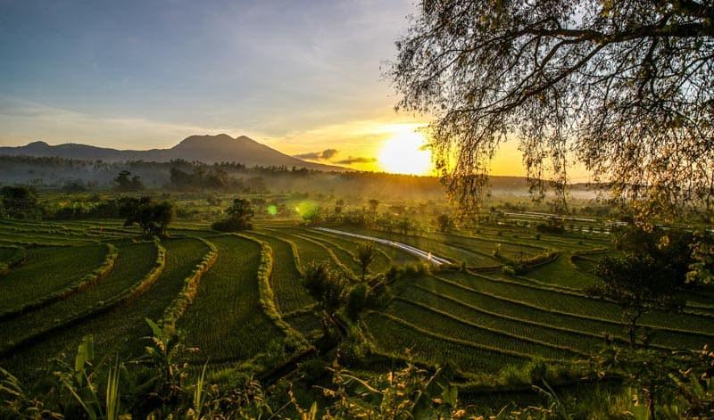 things do in bali visit rice paddies, rice paddies ubud indonesia, munduk rice paddies, sunrise rice paddies