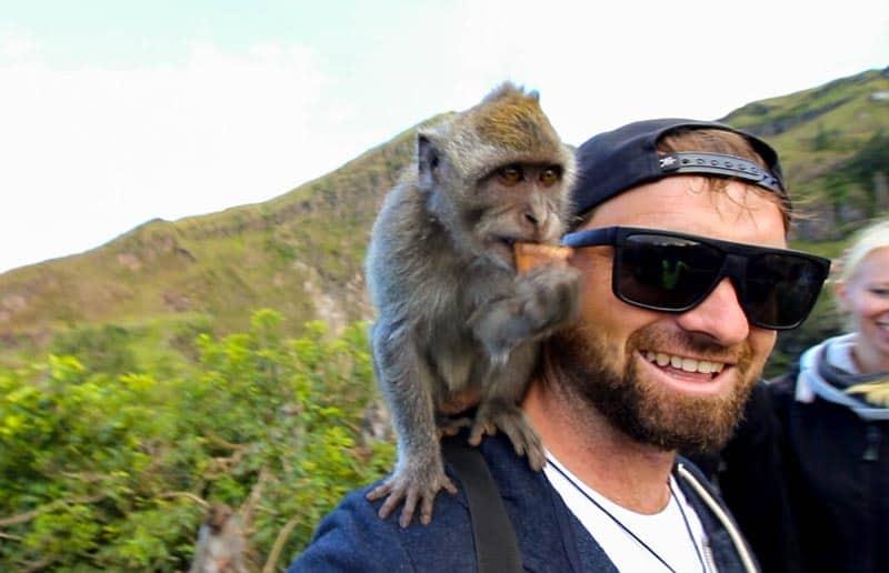 Bali Indonesia Mt Batur Volcano Monkey